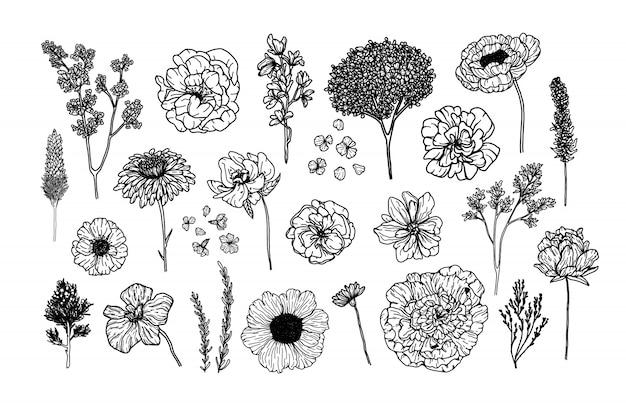 Grand Vecteur Défini Avec Des éléments Botaniques Dans Le Style Dessiné à La Main Vecteur Premium