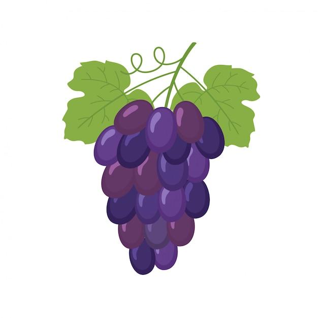 Grappe de raisin Vecteur Premium
