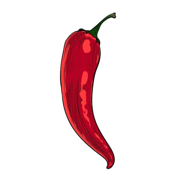Gravure de couleur rouge épicée Vecteur Premium