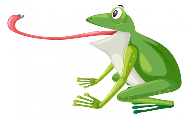 Une grenouille verte sur fond blanc Vecteur Premium