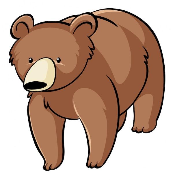Grizzly Sur Fond Blanc Vecteur gratuit