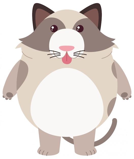 Gros chat sur fond blanc Vecteur gratuit