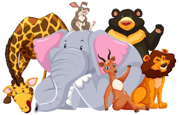 Groupe D'animaux Sauvages Vecteur gratuit