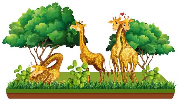 Groupe de girafe dans la nature Vecteur Premium