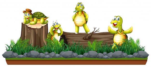 Groupe de tortues dans la nature Vecteur gratuit