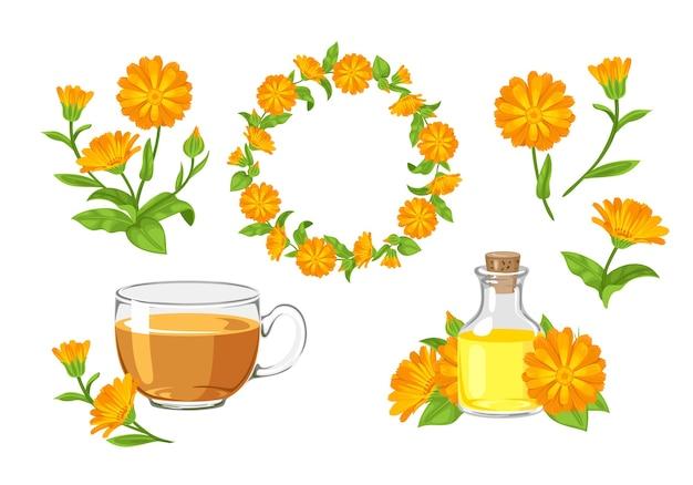 Guirlande De Fleurs De Souci Thé à L'huile De Calendula Et Bouquet Vecteur Premium