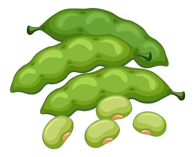 Haricots verts sur fond blanc Vecteur gratuit