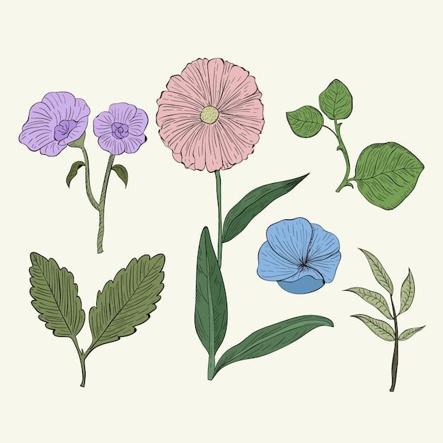 Herbes botaniques colorées dans un style vintage Vecteur gratuit