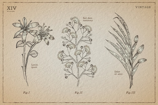 Herbes Botaniques Et Fleurs Sauvages Dans Un Style Vintage Vecteur gratuit