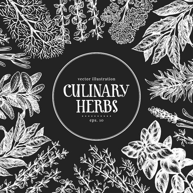 Herbes Culinaires Dessinées à La Main. Illustrations Vectorielles à Bord De La Craie. Cuisine Vintage Vecteur Premium