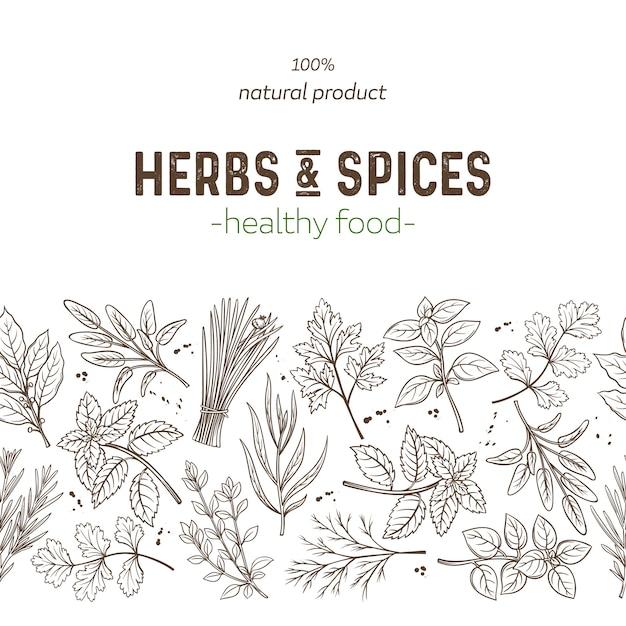 Herbes Et épices à Bordure Transparente Vecteur Premium