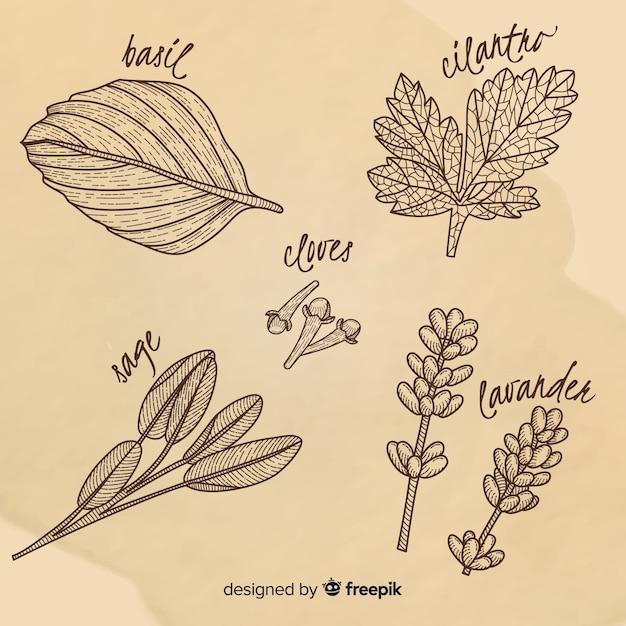 Herbes et épices botaniques dessinés à la main réaliste Vecteur gratuit