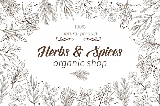 Herbes Et épices De Croquis Dessinés à La Main Vecteur Premium