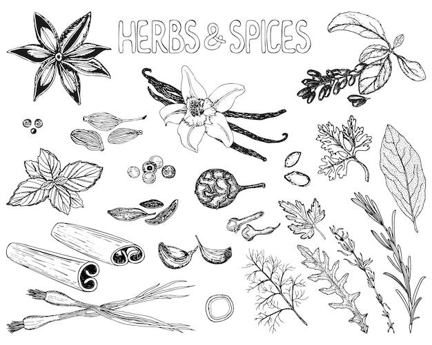 Herbes et épices dans le style de croquis Vecteur Premium