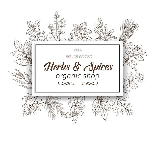 Herbes Et épices Vecteur Premium