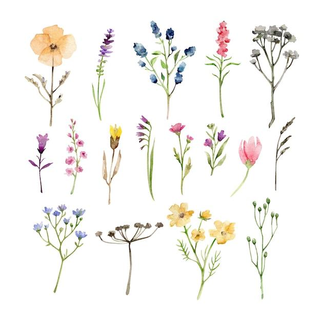 Herbes Et Fleurs Aquarelle Isolés Sur Blanc Vecteur Premium