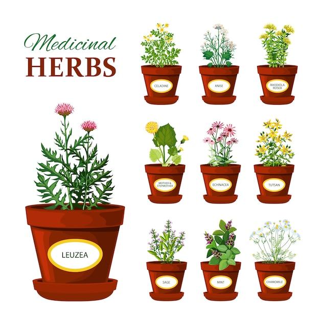 Herbes médicinales dans des pots avec des étiquettes Vecteur gratuit