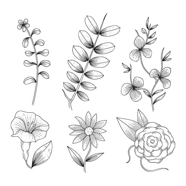 Herbes réalistes dessinées à la main et fleurs sauvages Vecteur gratuit