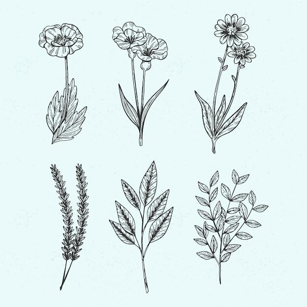 Herbes sauvages botaniques dans un style vintage Vecteur gratuit