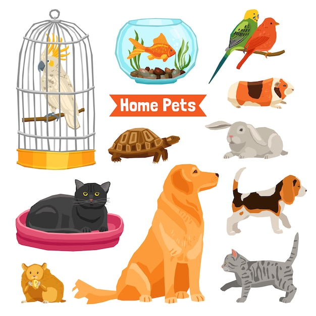 Home pets set Vecteur gratuit