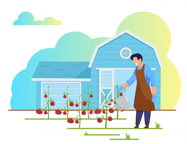 Homme agriculteur travaille sur le lit de jardin arrosage des tomates Vecteur Premium