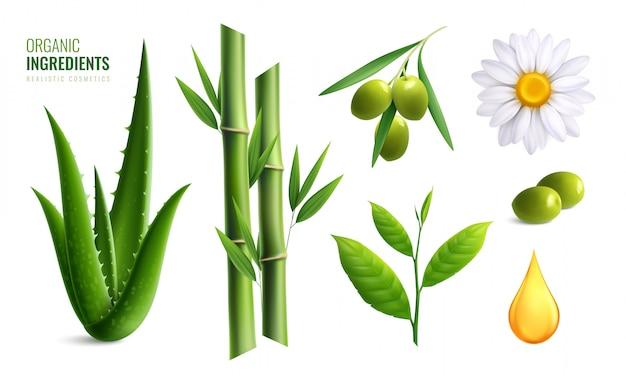 Icône D'ingrédients Cosmétiques Biologiques Réalistes Colorés Sertie D'illustration Vectorielle D'aloès Huile D'olive Bambou Camomille Vecteur gratuit