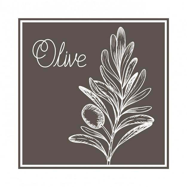 Icône isolé dessin fleur olive Vecteur Premium