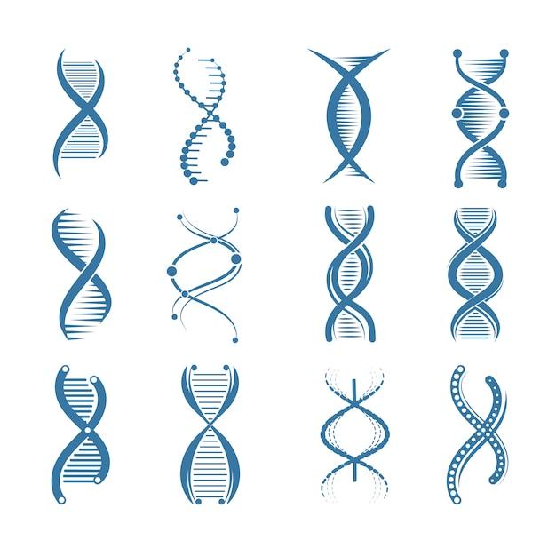 Icônes De L'adn. Biologie Génétique, Structure, Humain, Représentants Scientifiques Médicaux, Symboles, Isolé Vecteur Premium
