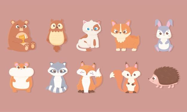 Icônes D'animaux Mignons Sertie D'ours Lapin Hibou Chat Chien Hamster Renard Raton Laveur écureuil Et Hérisson Vecteur Premium