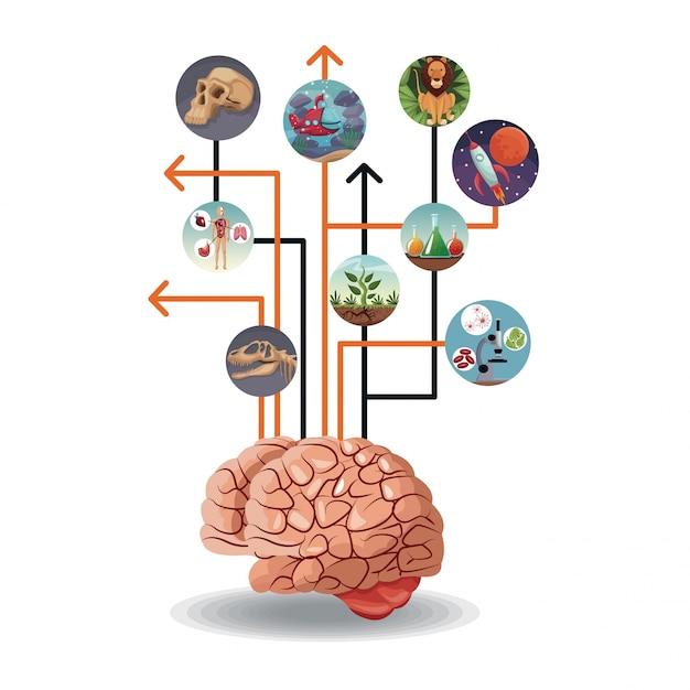 Icônes circulaires de couleur avec l'évolution du monde de l'image à l'intérieur connecté au cerveau Vecteur Premium