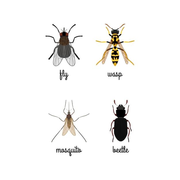 Icônes d'insectes colorés avec des noms Vecteur Premium