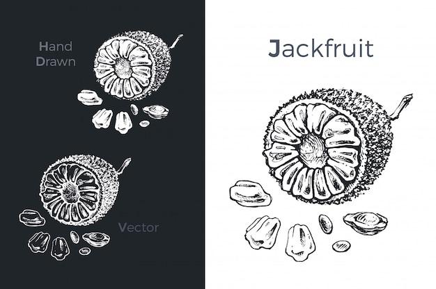 Icônes de jacquier dessinés à la main. Vecteur Premium