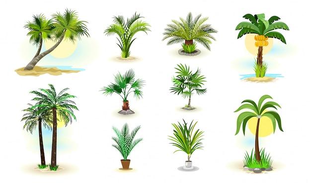Icônes De Palmiers Vecteur Premium
