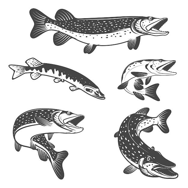 Icônes de poisson brochet. éléments de design pour club de pêche ou équipe. Vecteur Premium