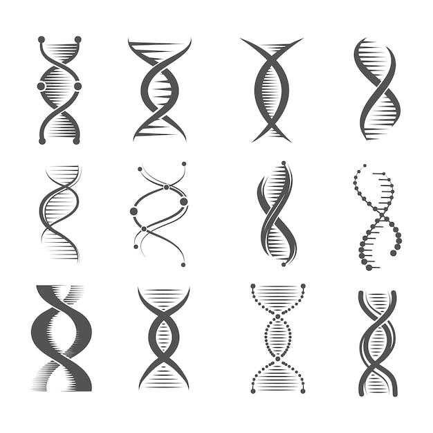 Icônes En Spirale Adn. Helix, Molécule De Recherche En Technologie Humaine Et Symboles Médicaux Et Pharmaceutiques Sur Les Chromosomes Vecteur Premium