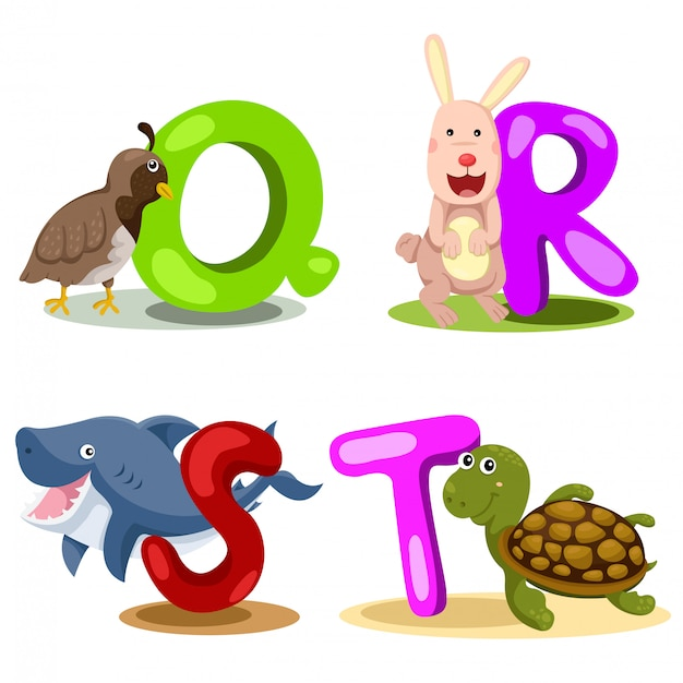 Illustrateur alphabet animal lettre - q, r, s, t Vecteur Premium