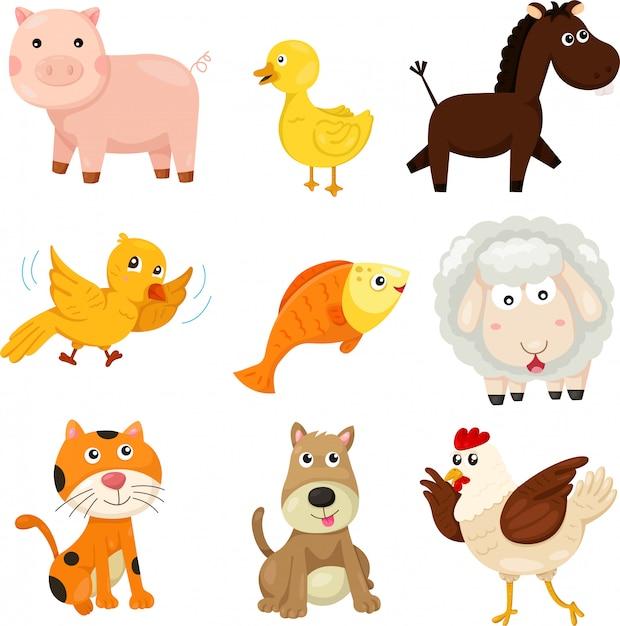 Illustrateur d'animal de ferme Vecteur Premium
