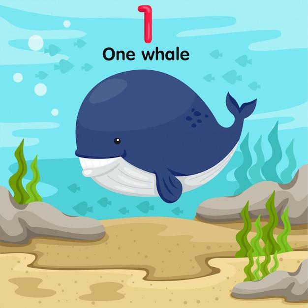 Illustrateur du numéro un de la baleine sous l'eau Vecteur Premium