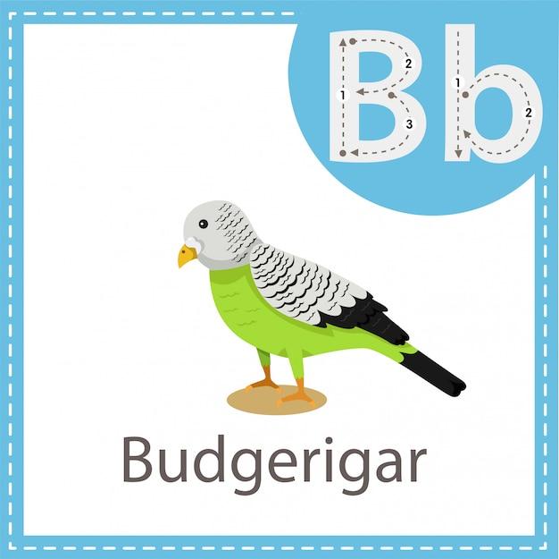 Illustrateur d'oiseau perruche Vecteur Premium
