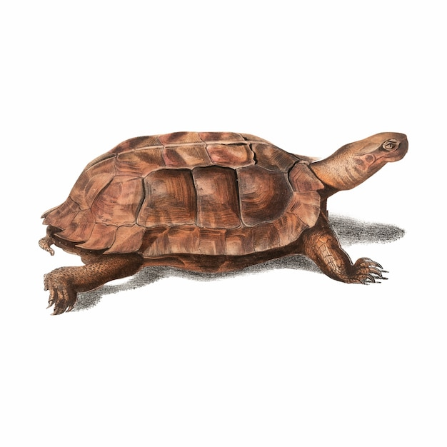 Illustration animale vintage Vecteur gratuit
