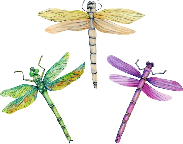 Illustration aquarelle de libellules colorées Vecteur Premium