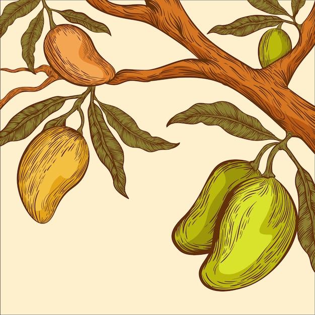 Illustration De Branche De Manguier Botanique Dessiné à La Main Vecteur gratuit