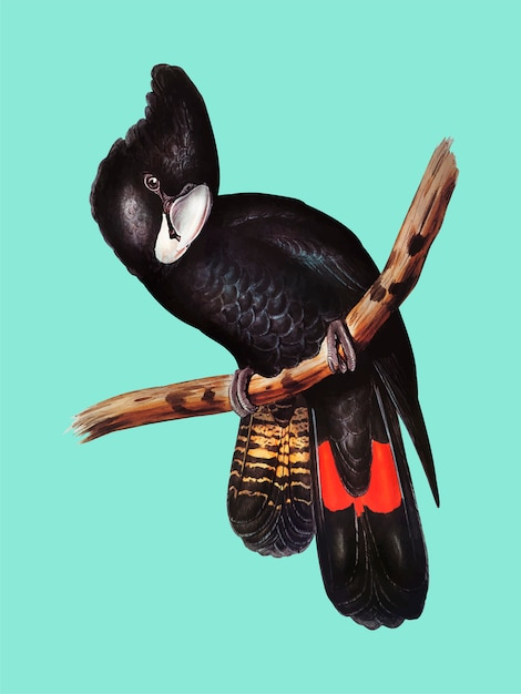 Illustration De Cacatoès Noir à Gros Bec Vecteur gratuit