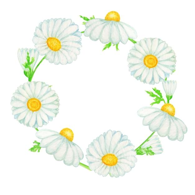 Illustration De Cadre Aquarelle Fleur De Camomille Marguerite. Herbes Botaniques Dessinés à La Main Isolés Avec Espace De Copie Vecteur Premium