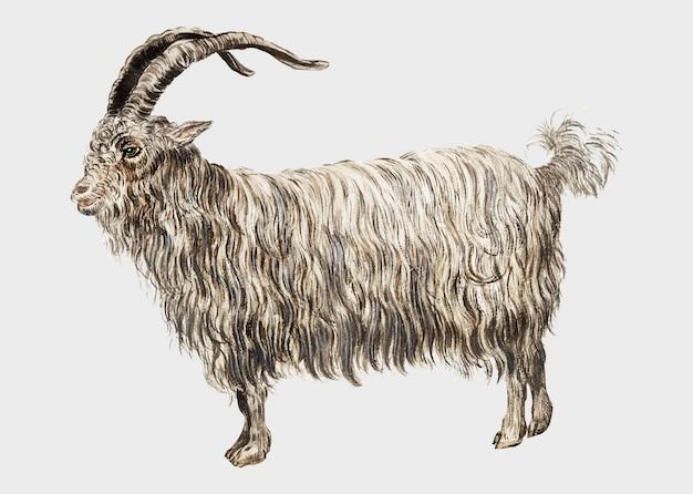 Illustration de chèvre vintage en vecteur Vecteur gratuit