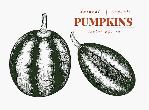 Illustration de citrouille. illustration de légumes vecteur dessiné à la main. style gravé halloween ou le jour de thanksgiving Vecteur Premium