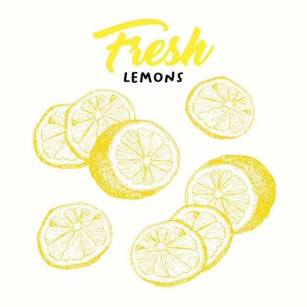 Illustration De Croquis De Citrons Frais Vecteur gratuit