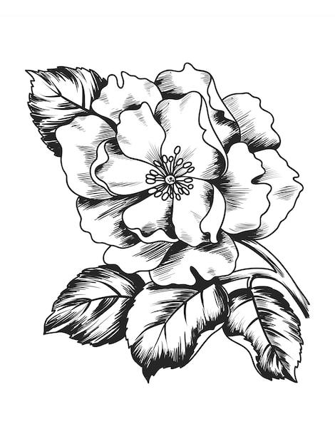 Illustration De Croquis Avec Pivoine Fleur Branche Vecteur Premium