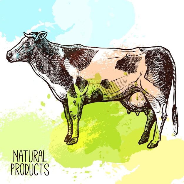 Illustration de croquis de vache Vecteur gratuit
