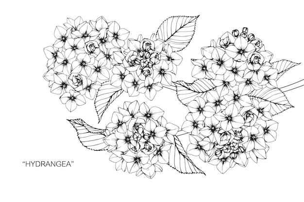 Illustration De Dessin De Fleur D Hortensia Telecharger Des